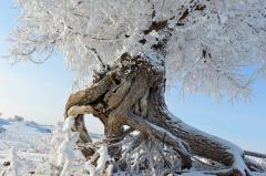 """一场""""冰雪奇缘""""即将上演 带给你不一样的冬季狂欢新"""